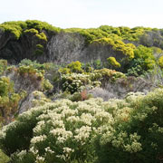 Flora at Cape Point