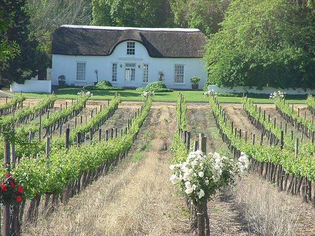 Stellenbosch Wine Estate